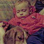 Kæledyr til baby - hvis ja, hvornår?